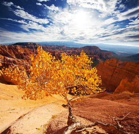 Autumn in Bryce